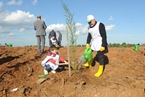 İSO Ağaçlandırma Çalışması